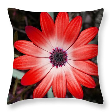 Throw Pillow featuring the photograph Happy Birthday Carl by Mr Photojimsf