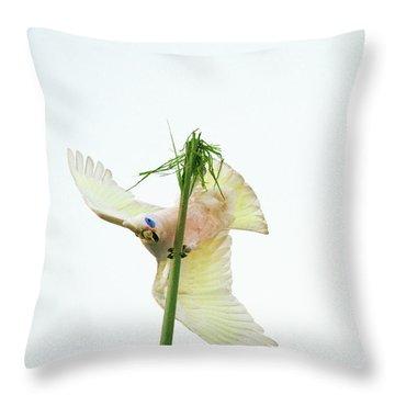 Happy Corella 3 Throw Pillow