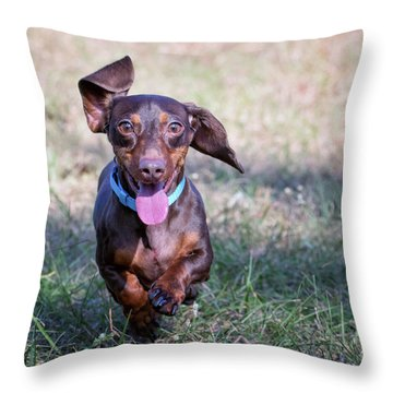 Happy Dachshund Throw Pillow by Stephanie Hayes