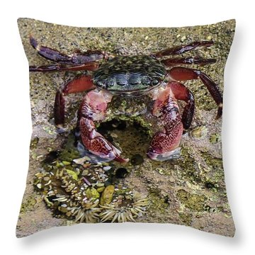 Happy Little Crab Throw Pillow