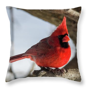 Happy Mister Cardinal Throw Pillow