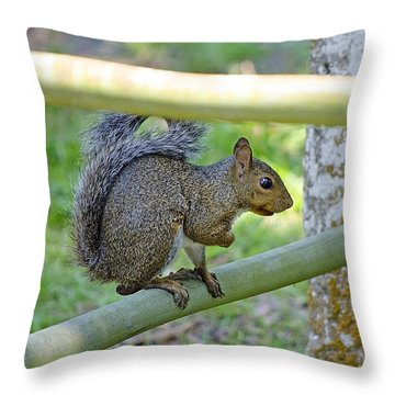 Happy Squirrel Throw Pillow by Kenneth Albin