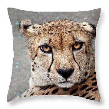 Harbin Leopard Throw Pillow
