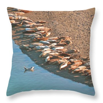Harbor Seal Conductor Throw Pillow