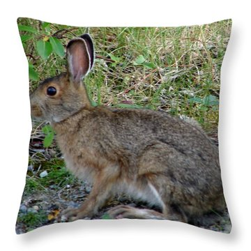 Hare In Summer Throw Pillow