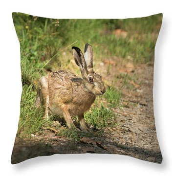 Hare In The Woods Throw Pillow