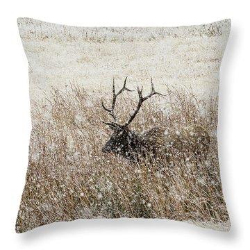 Harem Bull Throw Pillow