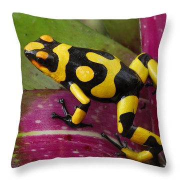 Harlequin Poison Dart Frog  Throw Pillow by Thomas Marent