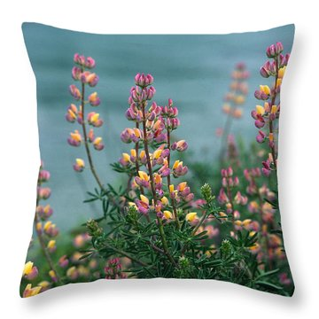 Harlequins In Harmony Throw Pillow by Kathy Yates