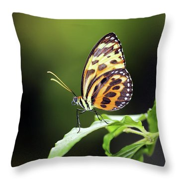 Throw Pillow featuring the photograph Harmonia Tiger Wing by Grant Glendinning