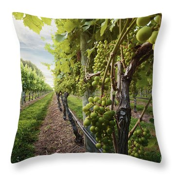 Harmony Vineyard Stony Brook New York Throw Pillow