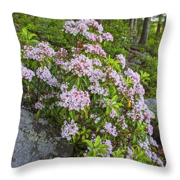 Harriman Pink And White Mountain Laurel Throw Pillow