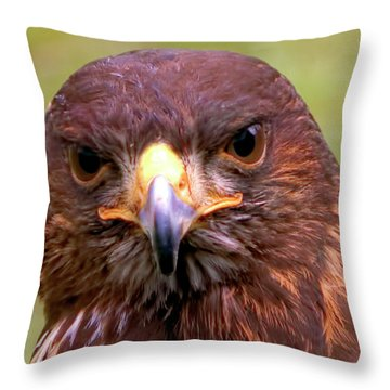 Harris Hawk Portriat Throw Pillow by Stephen Melia