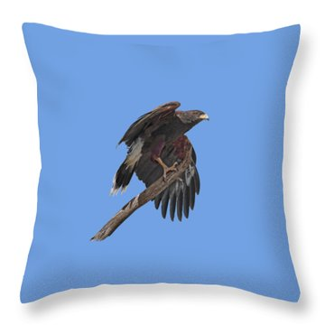 Harris Hawk - Transparent Throw Pillow