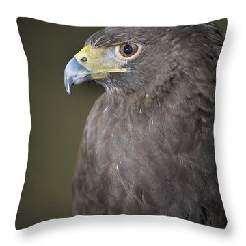 Throw Pillow featuring the photograph Harris Hawk by Tyson and Kathy Smith