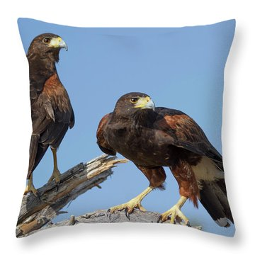 Harris Hawks Throw Pillow by Elvira Butler
