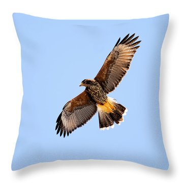 Throw Pillow featuring the photograph Harris's Hawk H37 by Mark Myhaver