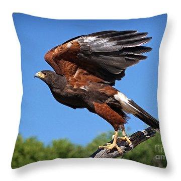 Harris's Hawk Throw Pillow