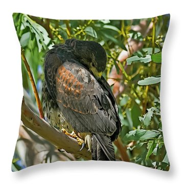 Throw Pillow featuring the photograph Harris's Preening V09 by Mark Myhaver