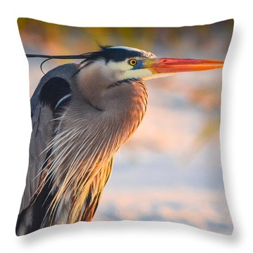 Harry The Heron With Plumage Close-up Throw Pillow