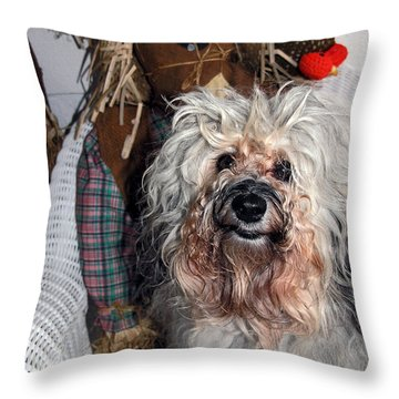 Havanese Cutie Throw Pillow by Sally Weigand