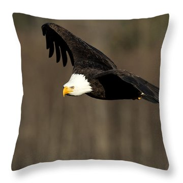 Having A Look-see Throw Pillow