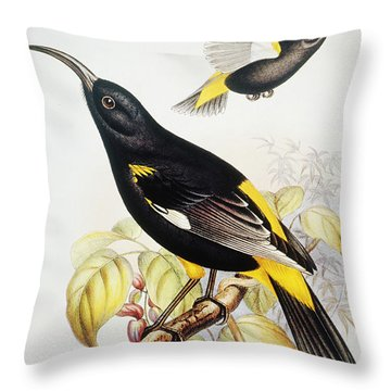 Hawaii Mamo Throw Pillow by Hawaiian Legacy Archive - Printscapes