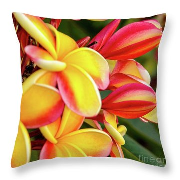 Hawaii Plumeria Flowers In Bloom Throw Pillow