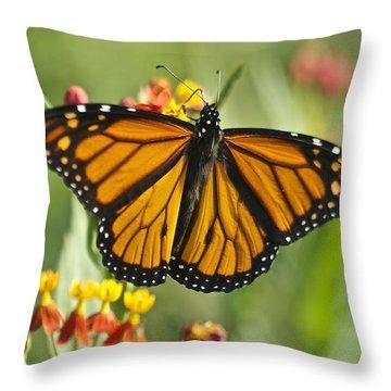 Hawaiian Monarch 3 Throw Pillow by Michael Peychich