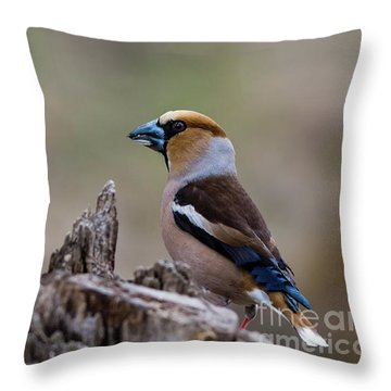 Hawfinch Perching Throw Pillow by Torbjorn Swenelius