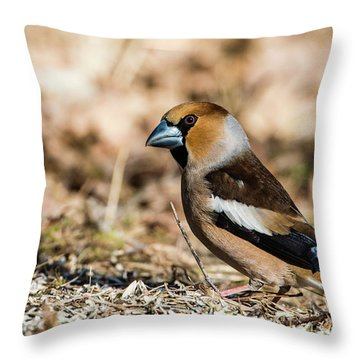 Hawfinch's Gaze Throw Pillow by Torbjorn Swenelius