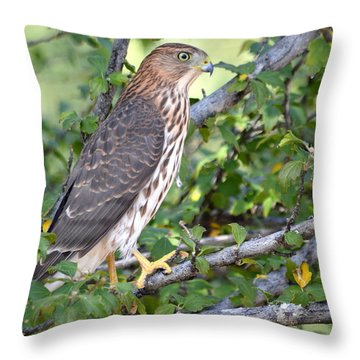 Throw Pillow featuring the photograph Hawk  by AJ Schibig