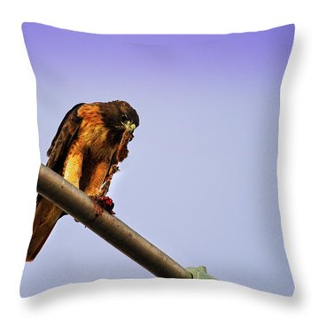 Hawk Eating Throw Pillow