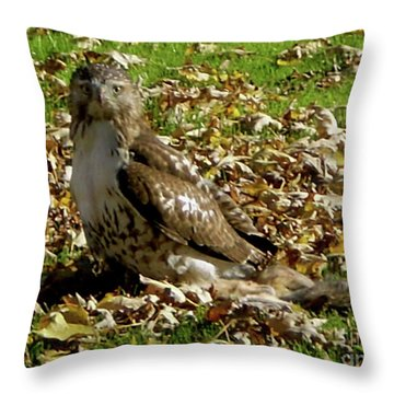 Hawk Falling Leaves Throw Pillow