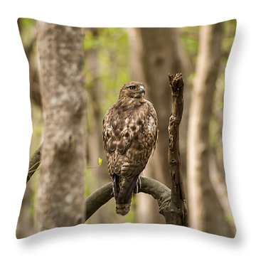 Hawk Hunting In The Woods Throw Pillow