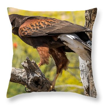 Hawk In A Tree Throw Pillow by Leo Bounds