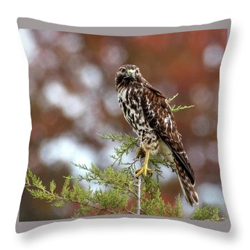 Red Shoulder Hawk Looking At Me Throw Pillow