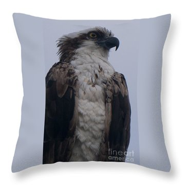 Hawk Looking Into The Distance Throw Pillow