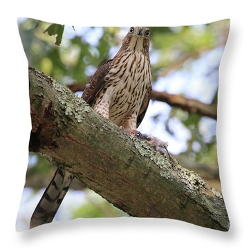 Hawk On A Branch Throw Pillow