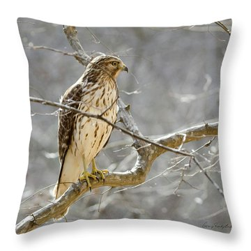Hawk On Lookout Throw Pillow