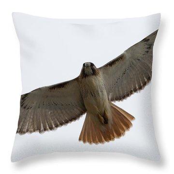 Hawk Overhead Throw Pillow