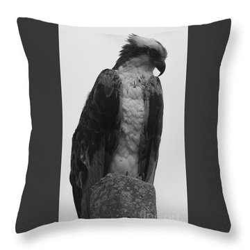 Hawk Perched Throw Pillow