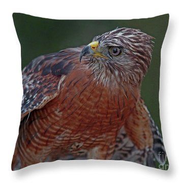 Hawk Portrait Throw Pillow by Larry Nieland