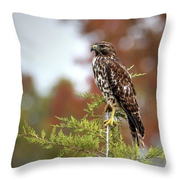 Red Shoulder Hawk Profile Throw Pillow