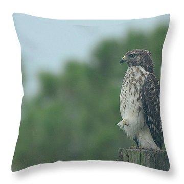 Hawk Resting A Leg Throw Pillow