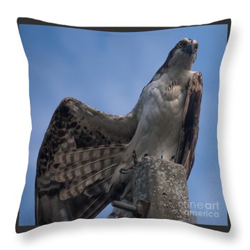 Hawk Stretching Throw Pillow