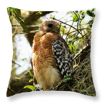 Hawk Taking A Rest On A Tree In Lakeland Florida Throw Pillow