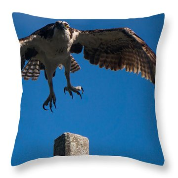 Hawk Taking Off Throw Pillow