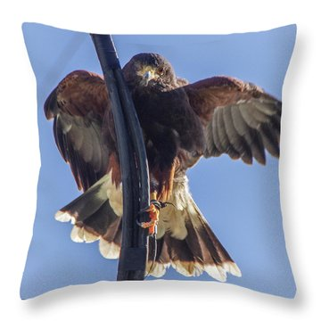 Throw Pillow featuring the photograph Hawk Watch 6 by Phyllis Spoor
