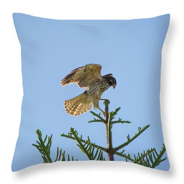 Hawk With Regal Landing Throw Pillow